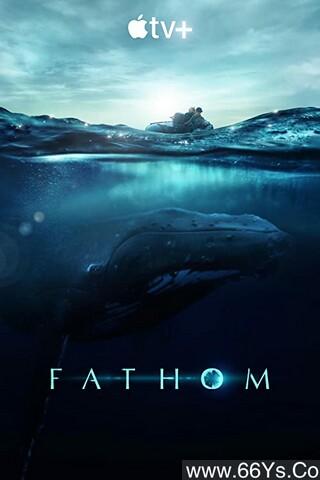 《座头鲸揭秘》下载_迅雷下载_纪录片_电影岛屿网